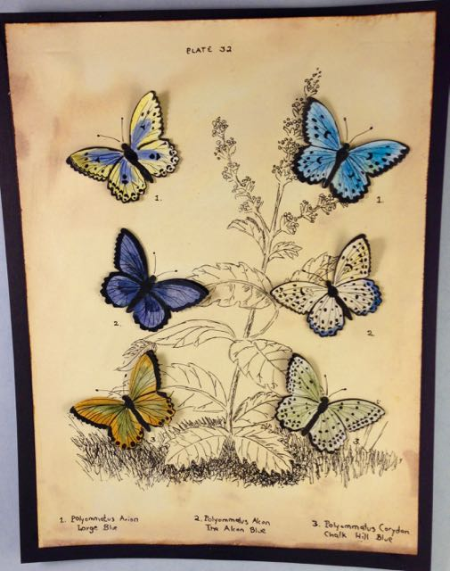 My first project based on a vintage butterfly print - Plate 32 from British Butterflies