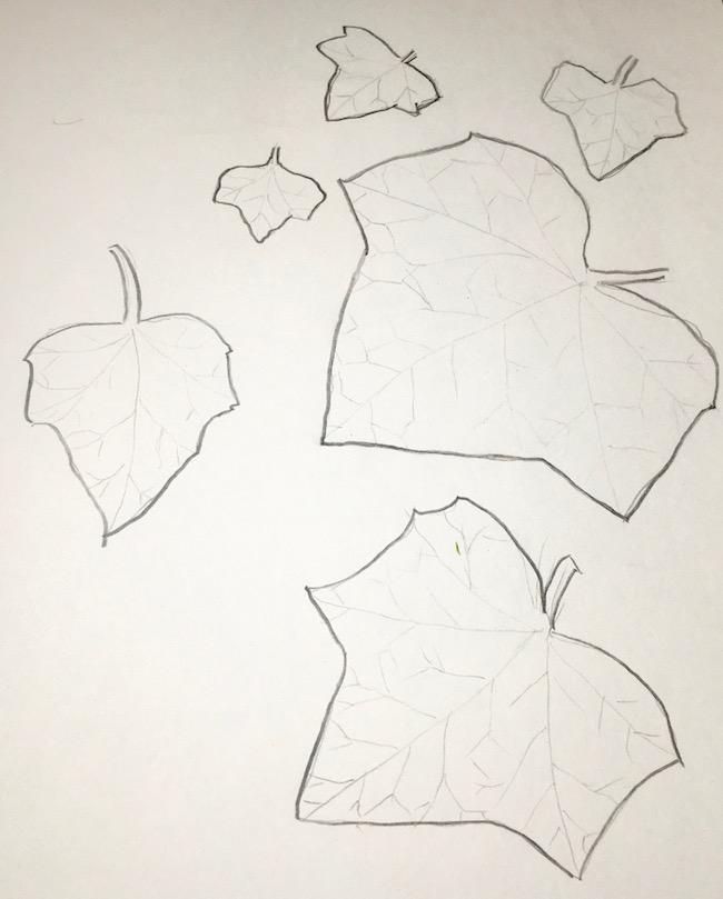 English Ivy tracings