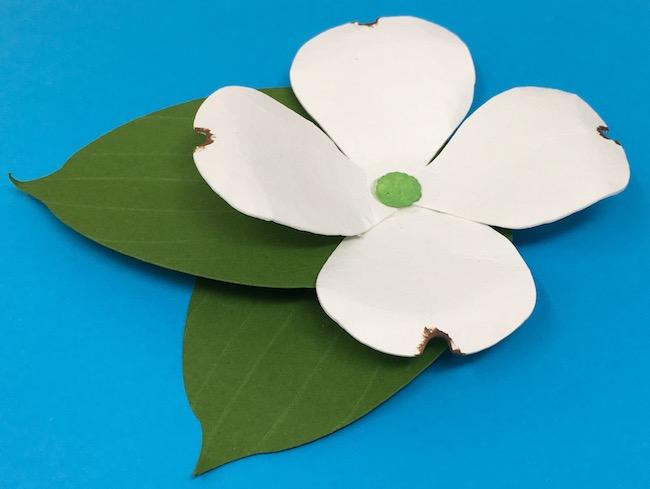 Paper dogwood flower up close