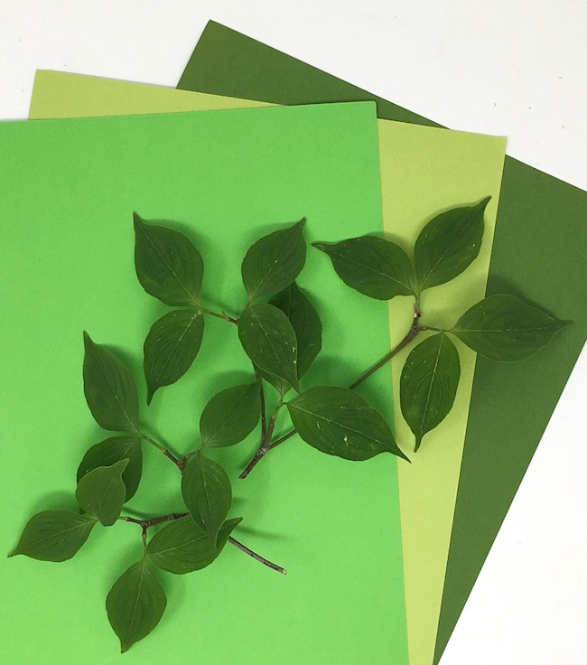 choose green color card stock for dogwood leaves