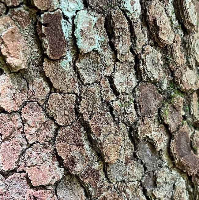 range of color and texture in real tree bark